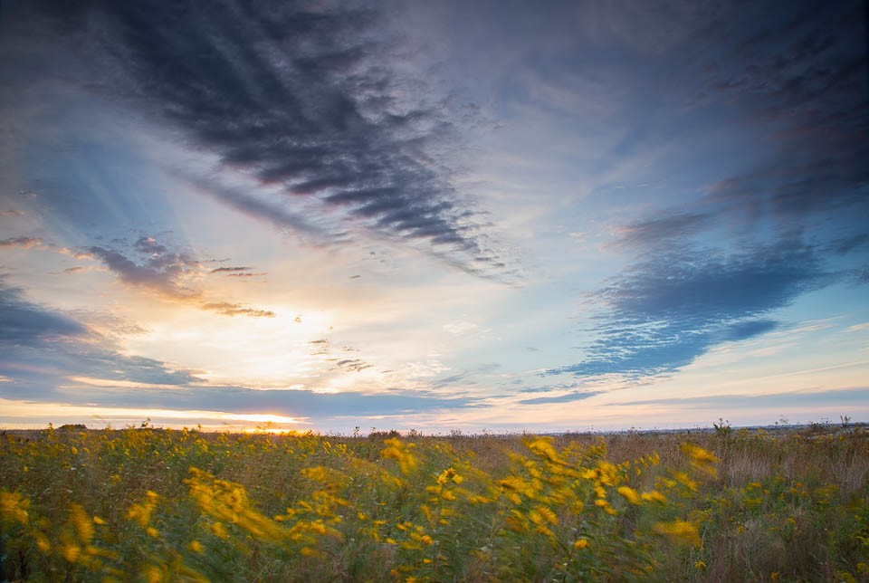 Sunrise and Goldenrod on the Prairie 2