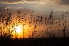 Prairie Grasses at Sunset 2