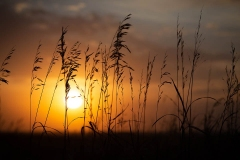 Prairie Grasses at Sunset 3