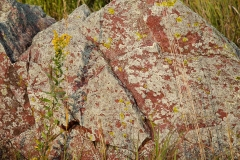 Goldenrod and Quartzite