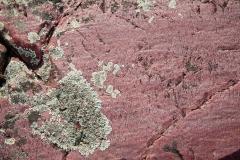 Quartzite and Lichen