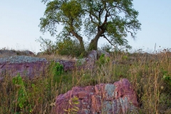 Quartzite and Three Sisters Tree