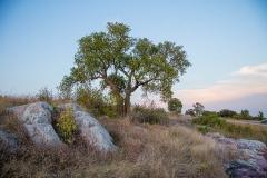 Three Sisters Tree