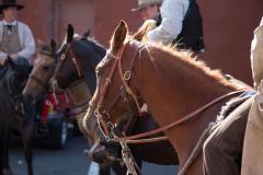 Horses at DJJD