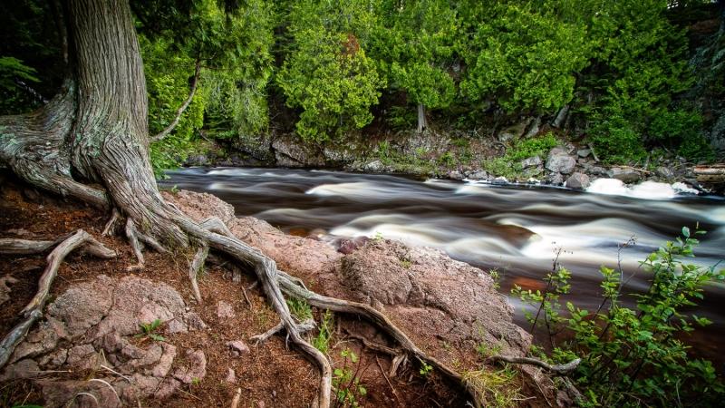 Cedar Roots & River