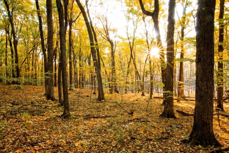 Autumn Forest Sunrise