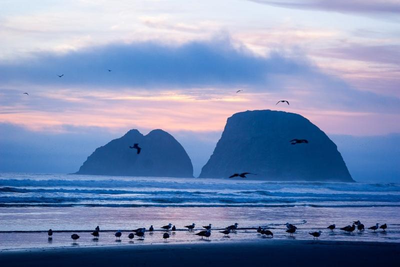 Birds and Three Arch Rocks