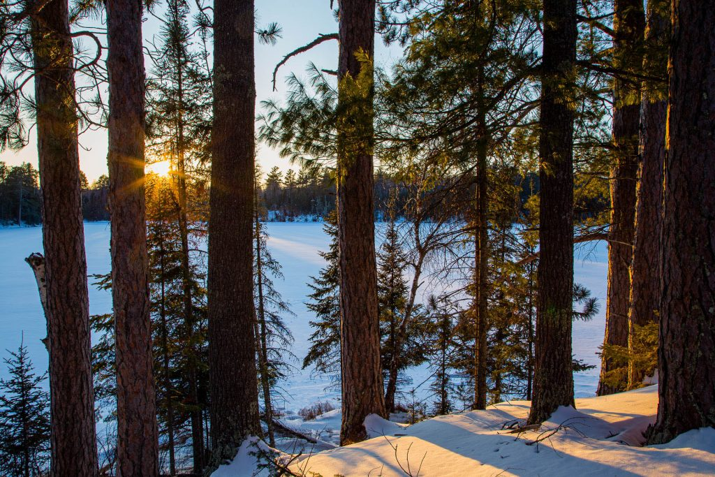 sunset behind pine trees