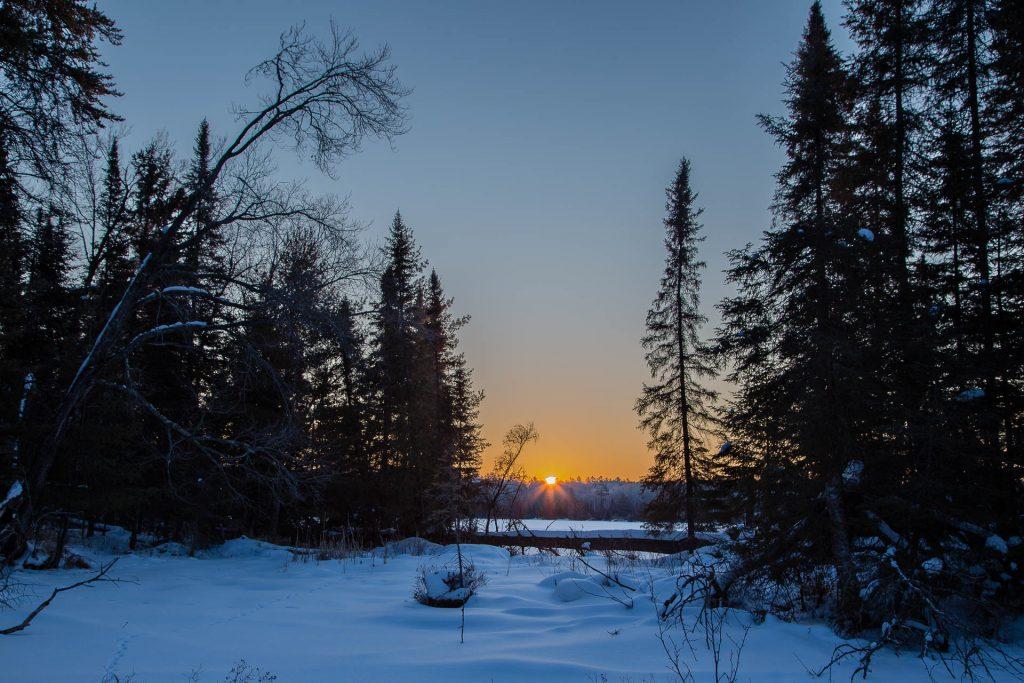 sunrise framed by pine trees